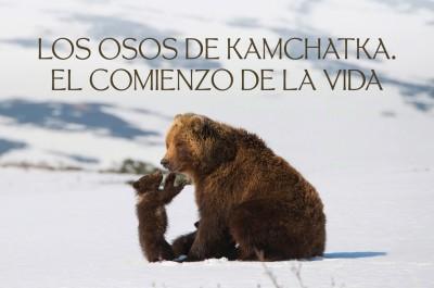 Los osos de Kamchatka. El comienzo de la vida